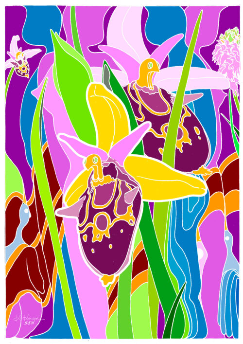 kkatagas_ophrys
